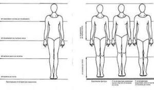 Пропорции тела